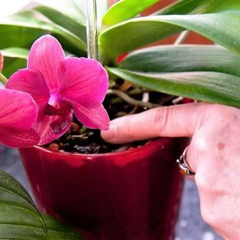 Einzigartige Orchideen im Gewächshaus